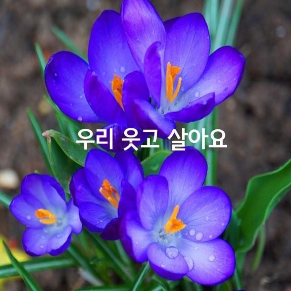 j_15fUd018svcmxvy9ad7xui_h8iiw5.jpg
